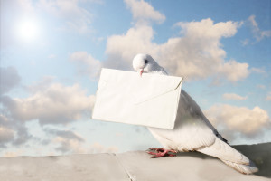 Carrier pigeon